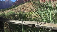 Tilt up ,Zion National park, landscape Stock Footage