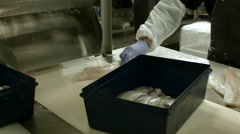 Man sorting fish in a processing plant Stock Footage