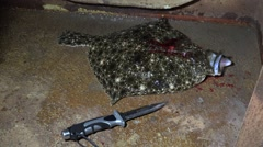 Wounded marine fish flatfish lies with the knife on the deck Stock Footage