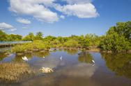 Egret in mangroves, Playa Pesquero, Holguin Province, Cuba, West Indies, Stock Photos