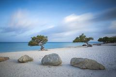 Divi Divi Trees on Eagle Beach, Aruba, Lesser Antilles, Netherlands Antilles, Stock Photos