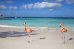 Flamingos on Flamingo beach, Renaissance Island, Oranjestad, Aruba, Lesser Stock Photos