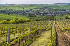 Vineyard landscape in Transylvania, near Brasov, Romania, Europe Stock Photos