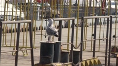Grey seagull stands on mooring bollard at pier include metal fences, 4k Stock Footage