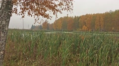 Autumn landscape (Temperate climatic zone) Stock Footage
