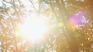 Sunshine with sun flares through green and orange autumn leaves Stock Footage