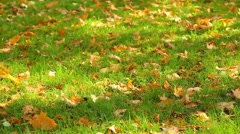 Fresh green grass covered with colorful bright fall orange leaves Stock Footage