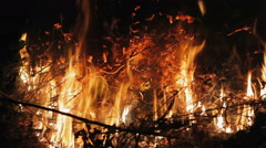 Fire in the forest dry branches Stock Footage