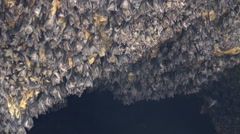4k Close up bats hanging at wall in bat cave of temple Goa Lawah Bali Stock Footage