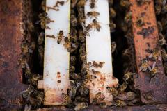 Bees on wooden beehive Stock Photos