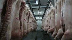 Dolly shot. Pork body hanging in the freezer. Meat Factory. Stock Footage