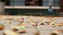 Autumn leaves on cobbles. Stock Footage