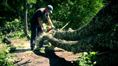 Male worker man sawing felled tree in park Stock Footage