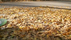Teen rides a skateboard through fallen autumn leaves in the park Stock Footage