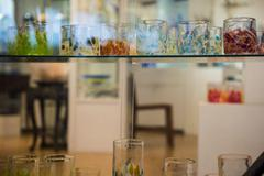 Colorful blown glasses on display Stock Photos