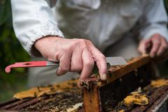 Beekeeper removing honeycomb from beehive in apiary garden Stock Photos