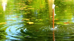 Vertical pipe with water on green summer pond Stock Footage