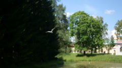 Seagull flying near pines day by the river Stock Footage