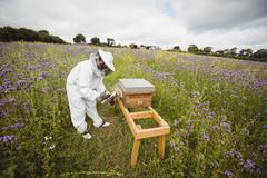 Beekeeper using bee smoker Stock Photos