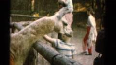 1962: children at petting farm CATSKILL, NEW YORK Stock Footage