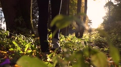 Girl in sneakers walks on fallen autumn leaves in the forest against blazing sun Stock Footage