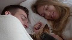 Yorkshire terrier waking up his owners Stock Footage