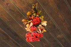 In racemes viburnum berries Stock Photos