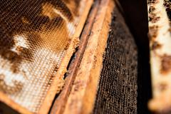 Honeycomb in a wooden box Stock Photos