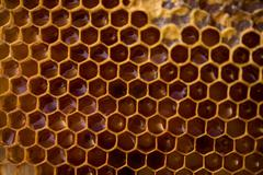 Honeycomb filled with honey Stock Photos