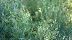 Green grass slow motion Stock Footage