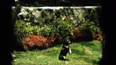 1965: a sleek black dog is performing tricks in anticipation of a treat  Stock Footage