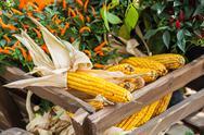 Fresh yellow corn vegetable Stock Photos