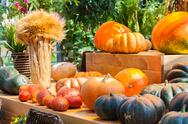 Autumn harvest pumpkin Stock Photos