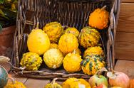 Autumn harvest pumpkin background Stock Photos