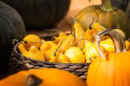Autumn harvest pumpkin background Stock Photos
