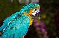 Green exotic parrot Stock Photos
