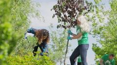 Medium low angle view of volunteers planting tree / Cedar Hills, Utah, United Stock Footage