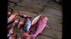 1965: fish as they lay waiting their final demise, the big red one  Stock Footage