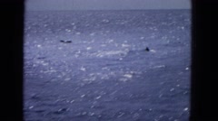 1965: a group of dolphins break the surface of the ocean  Stock Footage