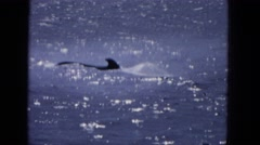 1965: a pair of dolphins swimming in the ocean as seen from a moving vessel Stock Footage