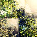 Fresh crisp green tree leaves backlit collage of toned images, shallow DOF Stock Photos