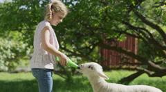 Medium shot of girl feeding bottle to lamb / Springville, Utah, United States Stock Footage