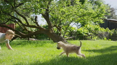 Wide panning shot of boy playing with dog in field / Springville, Utah, United Stock Footage