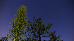 MoCo Tracking Astro Timelapse of Yucca Buds & Pine Tree in Forest  Stock Footage