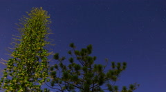 MoCo Tracking Astro Timelapse of Yucca Buds & Pine Tree in Forest -Long Shot Stock Footage