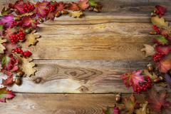 Thanksgiving background with berries, acorn and fall oak leaves Stock Photos