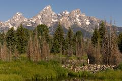Beaver Dam Forest Lake Teton National Park Wyoming Stock Photos