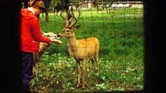 1967: deer feeding caged animal person red shirt SOUTH DAKOTA Stock Footage