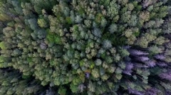Flight Over Autumn Forest in the North of Russia Stock Footage