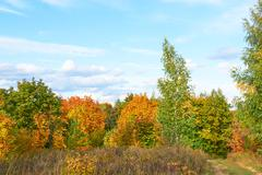 Scenic autumn landscape with colourful trees, grass and other vegetation on a Stock Photos